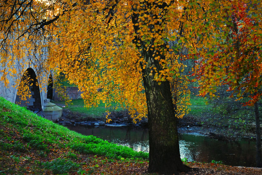 Akerselva Autumn Beauty In Nature Change Growing Idyllic Landscape Nature No People Non Urban Scene Non-urban Scene Norway Orange Color Oslo Outdoors Scenics Season  Tranquil Scene Tranquility Travel Destinations Tree Tree Trunk Water Yellow