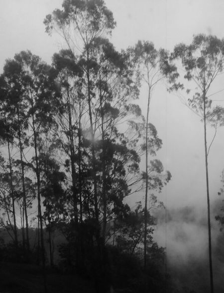 Paisaje Arte En Foco Composition Colombia Musical Academia Creativity Artistic Photography Mobilephotography Global Photographer Works Exhibition Eye4photography  Conceptual Photography  Nature_collection Nature Photography Black And White Blanco Y Negro White And Black Paraiso Terrenal