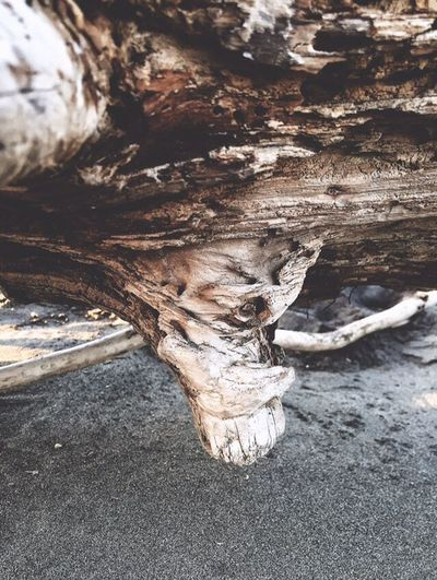 Abstract Nature Do You See What I See? Faces In Nature Faces In Places I See Faces Nature Photography Driftwood Nature Landscape #Nature #photography Views Scenic Perspective Beach Photography Oregon Coast Sand Drift Wood  Beach Landscapes Beachphotography