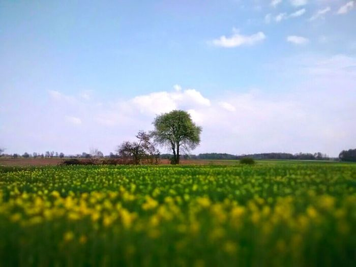 I miss summer... Tree Flowers Sky Nature EyeEm Nature Lover Clouds And Sky Field Beauty Landscape Poland