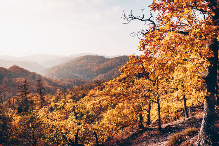Scenic view of tree mountains against sky during autumn