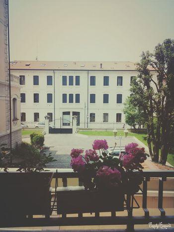 Viaggio Treviso Palazzo