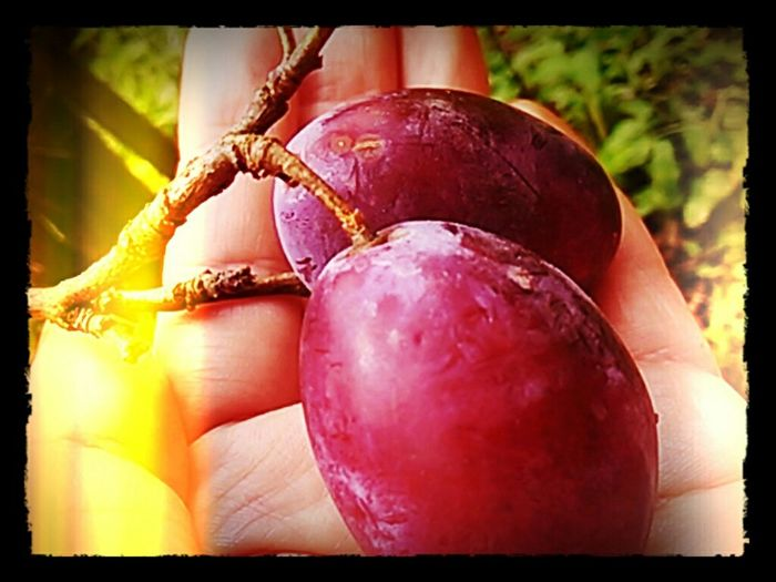The plums