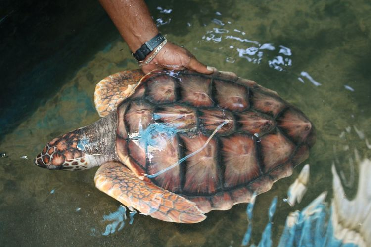 Cropped hand of man touching turtle in pond