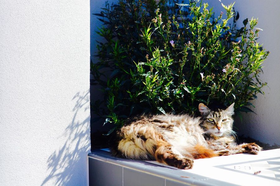 Sleepy cat enjoying the warm sun Animal Themes Cat Catlover ♡ Day Domestic Animals Domestic Cat Feline Nature No People One Animal Pets Plant Relaxing Sunbathing Cat