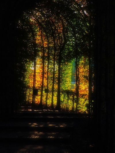 Colourful darkness Light And Shadow Tree Plant Nature No People Beauty In Nature Tranquility Sunlight Orange Color Shadow