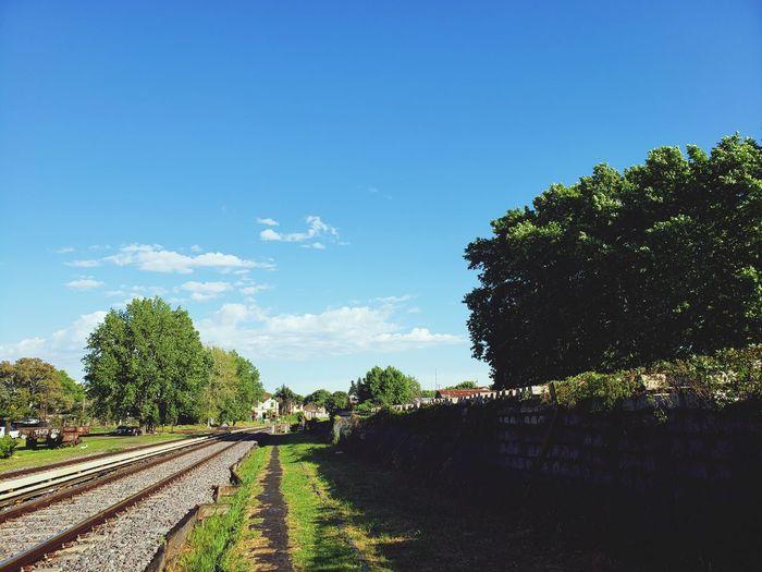 Depues de la lluvia un día soleado Tree Blue Sky Cloud - Sky