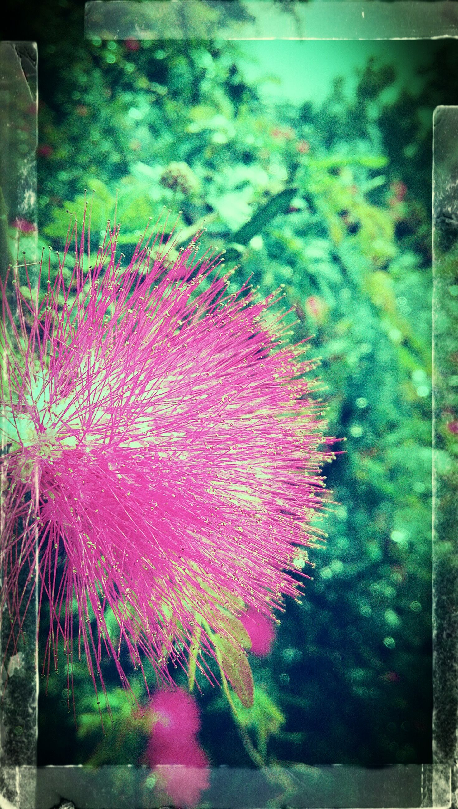 nature, plant, no people, flower, beauty in nature, growth, pink color, outdoors, green color, leaf, day, fragility, close-up, water, freshness, flower head