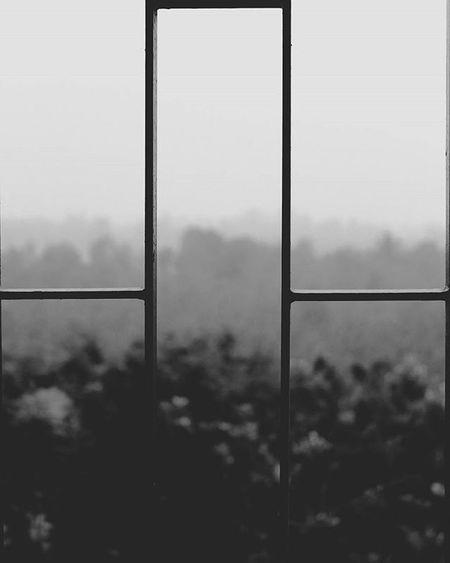 Looking At A Blackandwhite Photographe , You Are  Already Lookingat A Strangeworld Instagram Instapic Instadaily Block Nature Indiapictures Fog Blurbackground GreenIndia Shuttermaniac Shutterbug