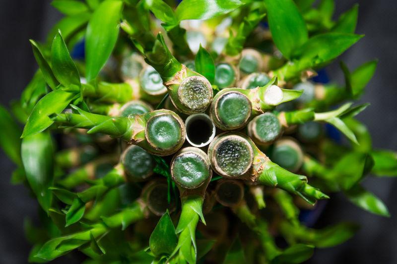 Bamboo Close-up