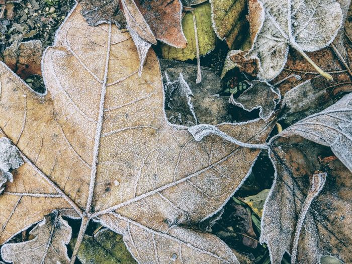 High angle view of frozen leaves