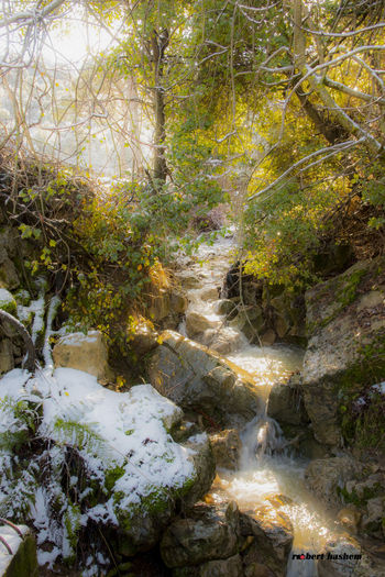 Beuty Of Nature Nature Snow Source Of Water Trees Water Waterfall Winter Winter Trees Winterwonderland