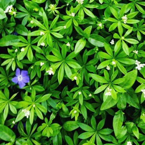 May Flowers Cannabis Plant Marijuana - Herbal Cannabis Herb Alternative Medicine Herbal Medicine Botany Periwinkle Natural Pattern In Bloom Focus Blossom Petal Blooming Pollen Bud