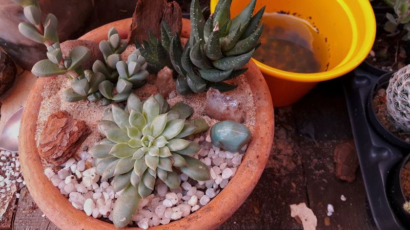 Plant Succulents Nature Beauty No People Fragility Green Color High Angle View Close-up Indoors  Day Nature