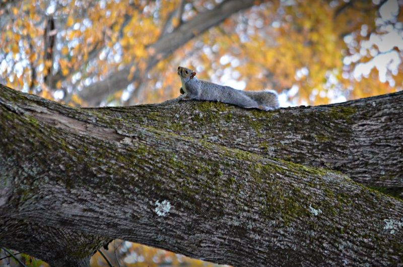 Beauty In Nature Focus On Foreground Squirrel Tree Tree Trunk