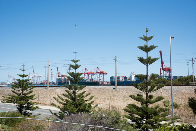 Norfolk pine trees front the industrial cranes in the commercial port in Fremantle, Western Australia Clear Sky Commercial Dock Crane Crane - Construction Machinery Electricity Pylon Equipment Freight Transportation Fremantle  Gantry Cranes Industrial Industry Nature Norfolk Pines Outdoors Port Road Sea Container Shipping  Shipping Containers Shipping Docks Shipping Port Shipping Terminal Sky Tree Western Australia