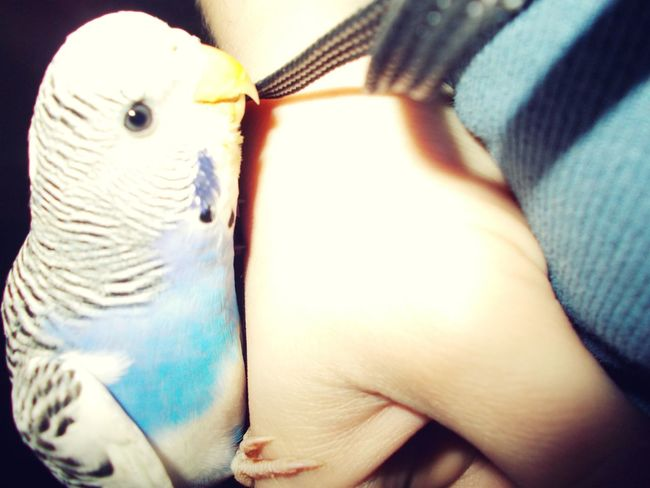 Hi! Hello World Lovely Bird Hanging Out Gr8time Check This Out Cheese! Kisses❌⭕❌⭕ Friendship Animal_collection Birds_collection