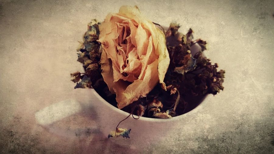 Withered Rose... 🌹 Dry Textured  Nature Close-up Freshness Check This Out Rose🌹 Dead Rose Withered Flower Nature The Photojournalist - 2017 EyeEm Awards EyeEmNewHere Flower Flower Head Flower Photography Retro Softness