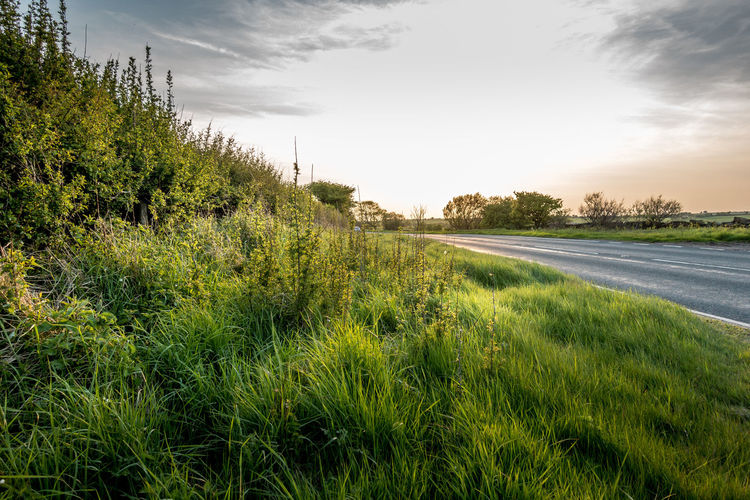 Road Side Road Side View Road Side Scenery Cloud - Sky Beauty In Nature Field Landscape Scenics - Nature Non-urban Scene Tranquil Scene Grass Sky Nature No People Growth Plant Tree Tranquility Green Color Land Environment Day Outdoors