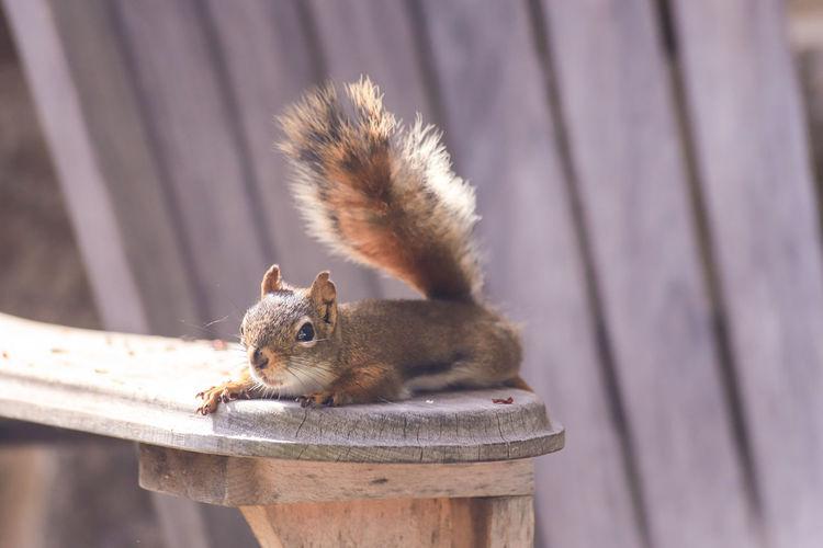 Squirrel taking a break