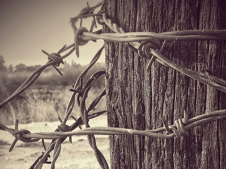 Barbed Wire Blackandwhite Photography Blackandwhitephoto Inspiration Picoftheday Inspire Creative Motivate  Mood Pictureoftheday EyeEmbestshots NEM Still Life Eye4photography  Showcase: January EyeEmBestPics Lostplaces Photographic Memory Texture Landscape Eyeemfun Outside Check This Out Rural Scenes Rural Forbidden Places