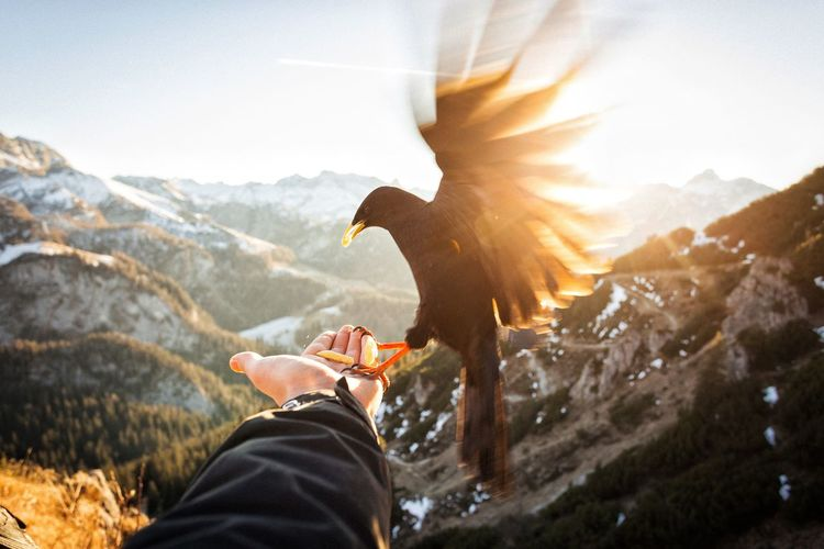 Birds Animals Bavaria Mountains Sunset Light Vscocam Cold Alps Landscape Power In Nature Exploring Outdoors Snow EyeEm Best Shots Nature Winter