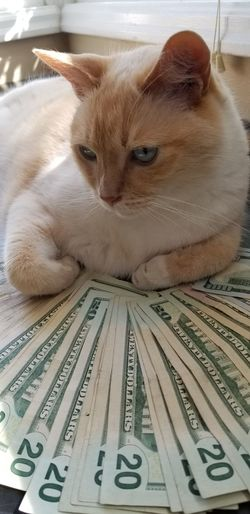 cats on cash US