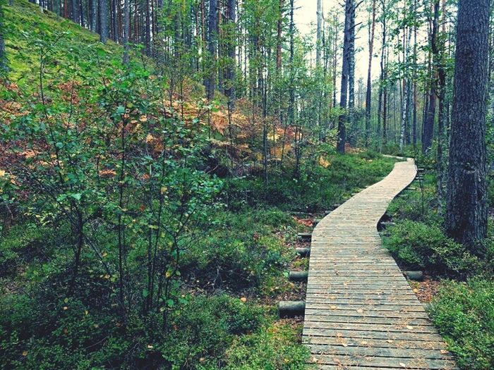 Nature Estona Forest Active Lifestyle