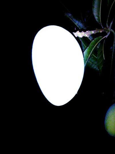 The mango Nature Night