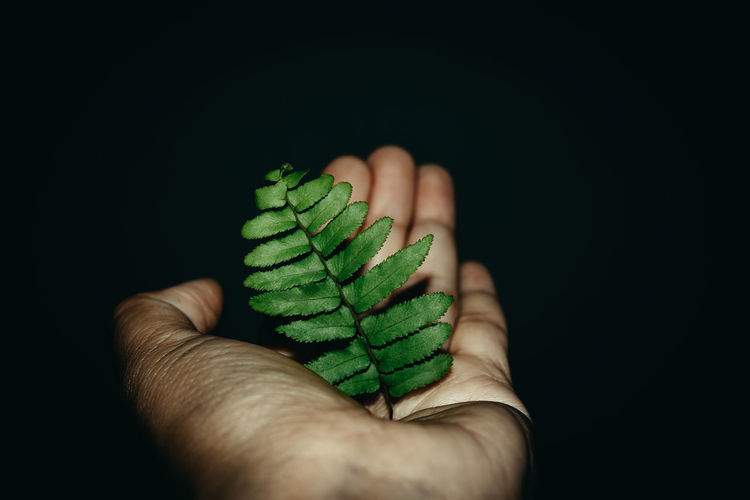 Close-up of hand holding leaves over black background