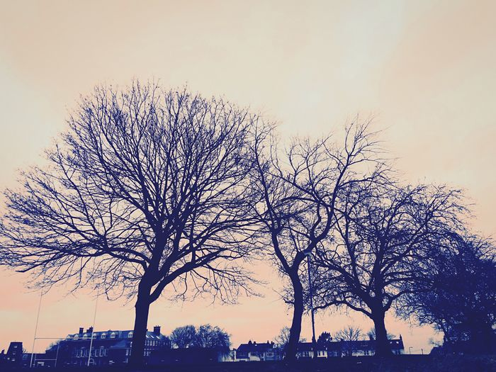 Naves trees Trees Naked Trees Sunset Silhouettes