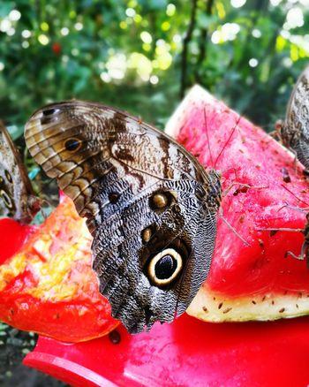 Jardin Botanico - Medellin - Colombia Jardin Botanico Mariposas Butterfly Papillon Nature Medellin City Colombia Travel
