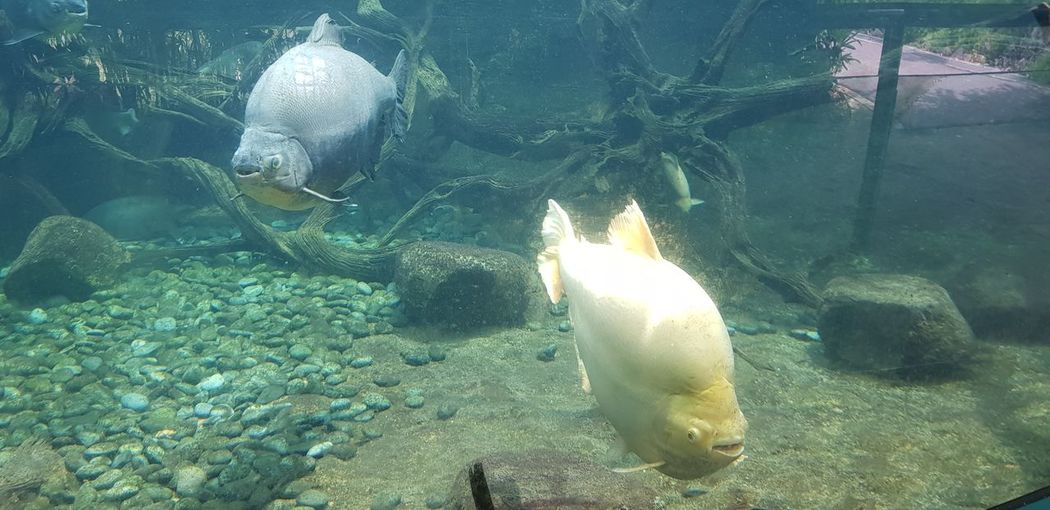 Fish Tank UnderSea Sea Life Swimming Water Underwater Sea Fish Group Of Animals Aquarium Fish Tank Tank Coral Tropical Fish