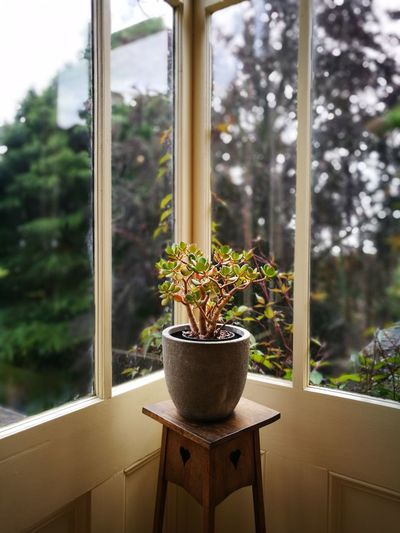 Close-up of potted plant against window