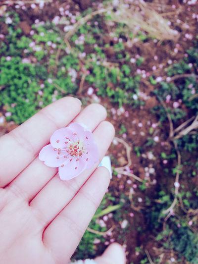 花谢花飞花满天