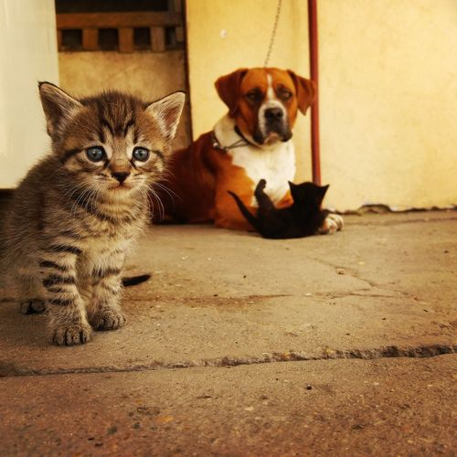 Pets Looking At Camera Domestic Animals Dog Animal Animal Themes Portrait Cute Mammal Puppy One Animal No People Sitting Domestic Cat Day Outdoors Close-up Friends Lg V10 Subotica LGV10 Cat And Dog