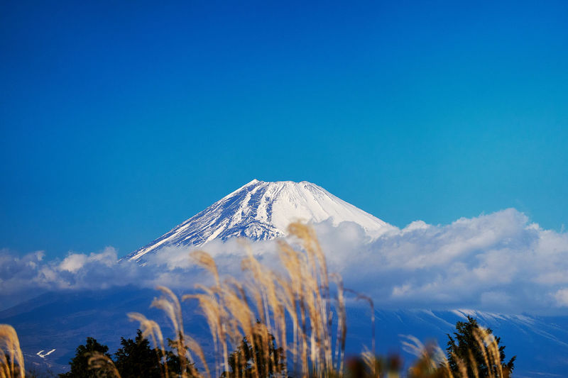 Mt.Fuji Volcano Snowcapped Mountain Winter Sky Scenics - Nature Beauty In Nature Mountain Tranquil Scene Tranquility Non-urban Scene Snow Plant Tree Nature Environment Cloud - Sky No People Travel Destinations Blue Cold Temperature Mountain Peak Outdoors Power In Nature Volcanic Crater