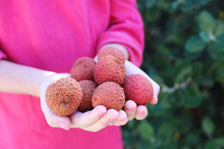 Midsection of woman holding lychees in cupped hands