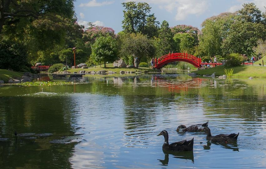 Reflection Water Outdoors Lake Animals In The Wild Nature Buenos Aires Argentina Photography Jardin Japones