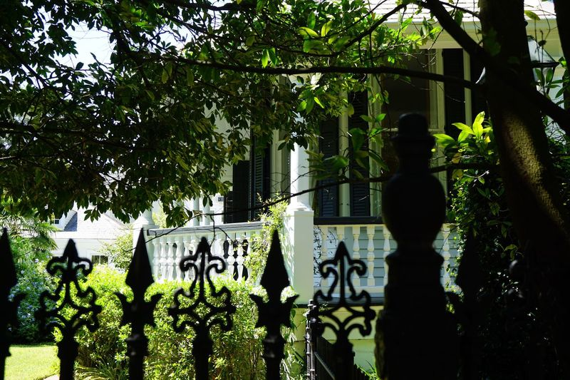 Garden District, New Orleans Tree Day Outdoors Growth Green Color No People Sunlight Nature Architecture