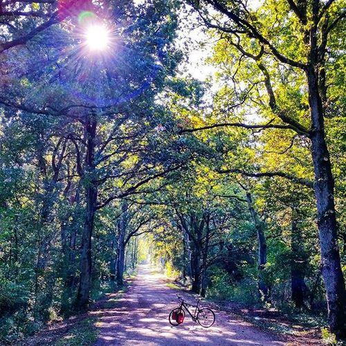 Enjoy your Saturday - even when its rainy! 🚲 Picoftheday Nofilter 😚 Rosebikes Testfahrt Instabike Cycling Fahrrad Fahrradfahren Biketouring Reiserad Nature Naturegram Sunlight Wood Color Green Instamood Schleswigholstein Activiapro