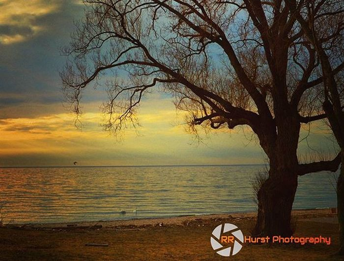 The tree with the spectacular view. @outdoorphotomag @photographymagazine @PhotographyWeek @photonewscanada Lakeontario  Orangesky Sunsets Igsunsets Blue Springisintheair Warm Beautiful Oldtree Beach Water Calm Mariecurtispark Longbranch Mississauga Colourful Outdoorphotography Getoutside OutsideIsFree Southernontariophotographer Nikonphotographers Prophotographer Nikond7000 Nikonphotography Rrhurstphotography artsburlington latowphotographersguild