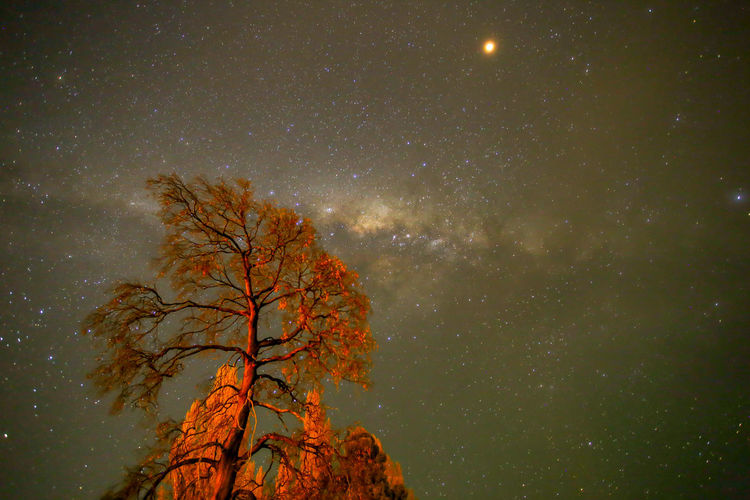 Milky way (ทางช้างเผือก) Travel Travel Destinations Newzealand EyeEm Best Shots EyeEm Nature Lover EyeEm Selects EyeEm Gallery Eye4photography  EyeEm Eyeem Market Astronomy Galaxy Tree Star - Space Milky Way Space Illuminated Constellation Sky Space And Astronomy Astrology Astrology Sign Infinity