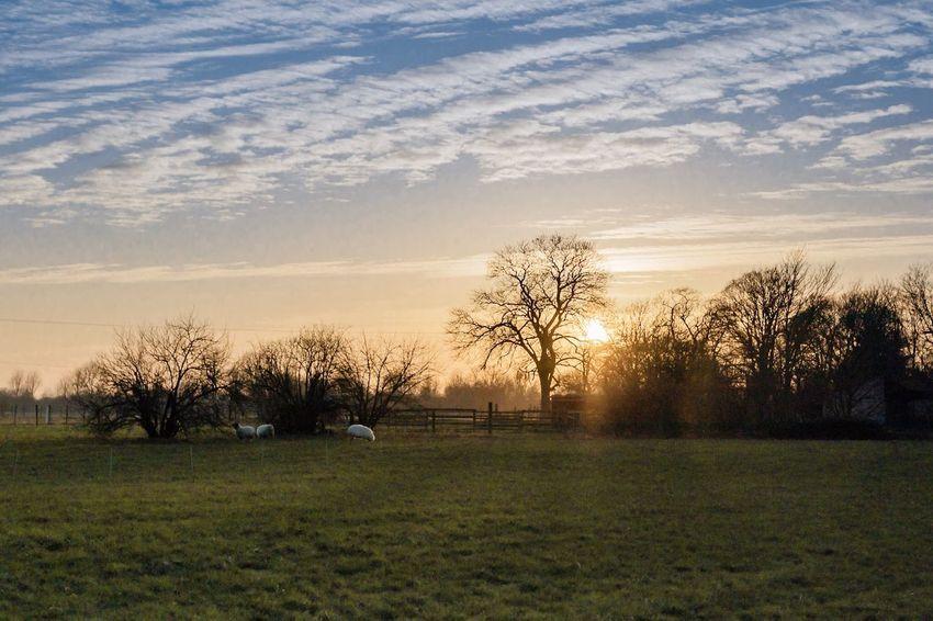 Abendstimmung über Willich Sunset_collection Willich Sunset Sundown Winter EyeEmNewHere