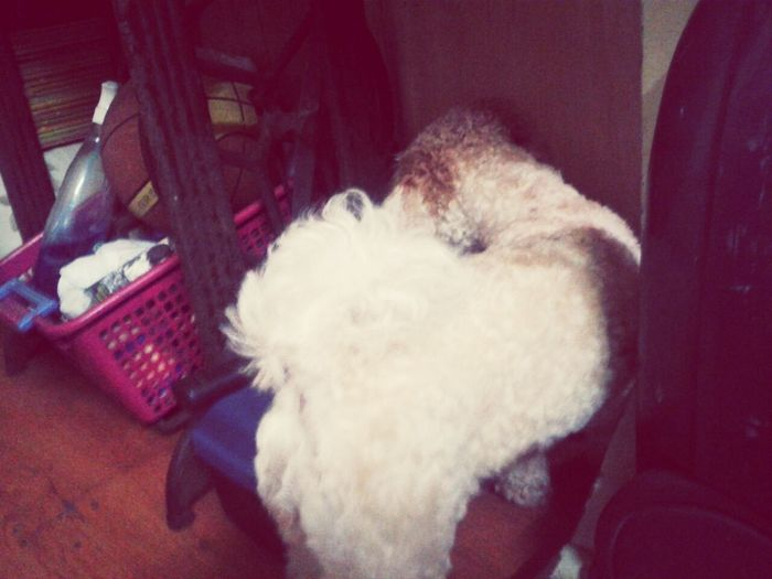 i just want to play YOU LITTLE PESKY RAT! willow trying to catch some rats :3 I Love My Dog Dog Hey Willow