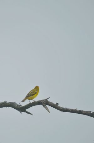 Bird Yellow Alone Looking Away One Sad & Lonely Time Photography Simple Things Different