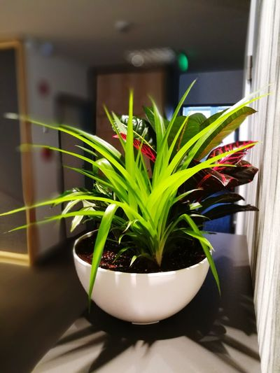 Plant Green Interior Interior Design Plant Life Flower Colours Of Nature Indoors  No People Vibrant Color Vibes Design Office Office Interior Officeplants Officeplant