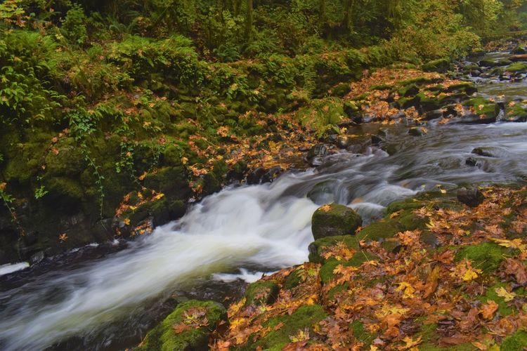 Autumn Beauty In Nature Blurred Motion Day Forest Growth Long Exposure Motion Nature No People Outdoors Plant Power In Nature Scenics Tranquil Scene Tranquility Tree Water Waterfall