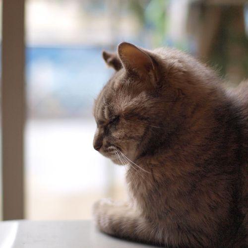 Cat 猫 My Cat Oyabin Angrycat