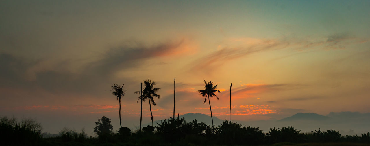 The Traveler - 2018 EyeEm Awards Beauty In Nature Cloud - Sky Coconut Palm Tree Environment Growth Idyllic Nature No People Non-urban Scene Orange Color Outdoors Palm Tree Plant Romantic Sky Scenics - Nature Silhouette Sky Sunset Tranquil Scene Tranquility Tree Tropical Climate